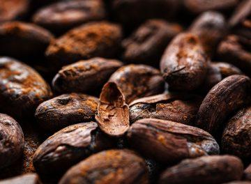 Raw cacao beans with cacao powder. Closeup